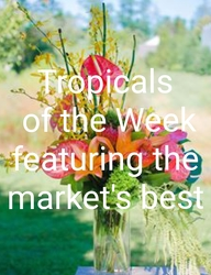 Tropicals of the Week Arrangement from Bakanas Florist & Gifts, flower shop in Marlton, NJ