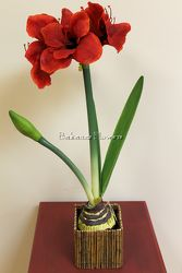 Amaryllis in Willow Cube  from Bakanas Florist & Gifts, flower shop in Marlton, NJ