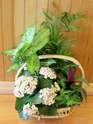 Natural Wicker Planter Collection from Bakanas Florist & Gifts, flower shop in Marlton, NJ