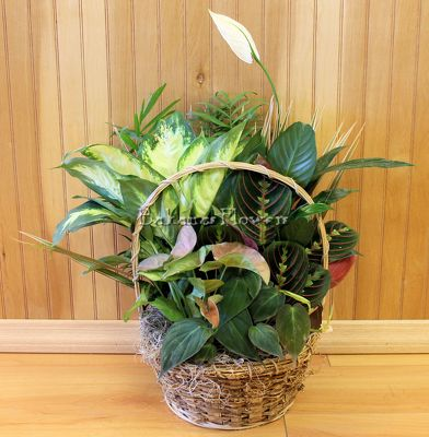 Our Round Planter from Bakanas Florist & Gifts, flower shop in Marlton, NJ