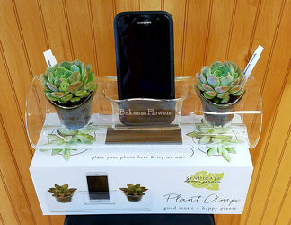 Plant Amp from Bakanas Florist & Gifts, flower shop in Marlton, NJ