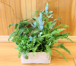 Tranquil Fern Garden from Bakanas Florist & Gifts, flower shop in Marlton, NJ