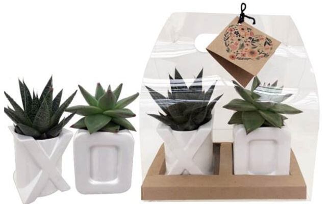 XO Succulent Gift Pack from Bakanas Florist & Gifts, flower shop in Marlton, NJ