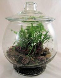 Gallon Terrarium  from Bakanas Florist & Gifts, flower shop in Marlton, NJ