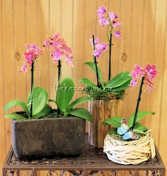 Miniature Phalaenopsis Garden from Bakanas Florist & Gifts, flower shop in Marlton, NJ