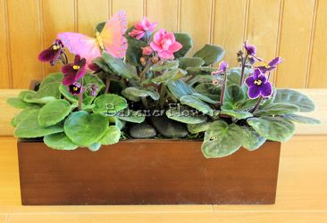 African Violets Garden from Bakanas Florist & Gifts, flower shop in Marlton, NJ