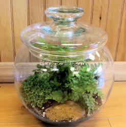 Bubble Bowl Terrarium from Bakanas Florist & Gifts, flower shop in Marlton, NJ
