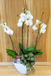 Blooming Phalaenopsis Gardens from Bakanas Florist & Gifts, flower shop in Marlton, NJ
