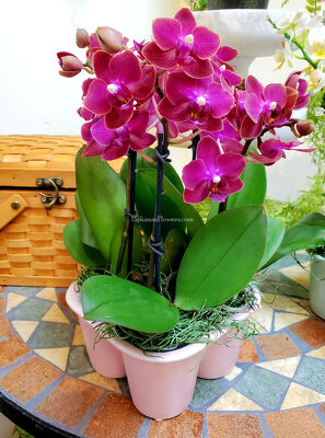 Phalaenopsis Orchid Egg Crate Garden from Bakanas Florist & Gifts, flower shop in Marlton, NJ